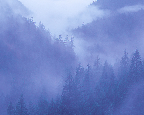 Fog in the Cascade Range, Elkhorn, Oregon. From: Mastering Nature Photography by John Kieffer .  John offers private photo tours and workshops throughout Colorado. Year-round. .  John offers private photo tours throughout the western USA, especially Colorado. Year-round.