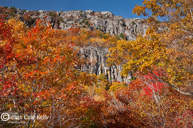 Autumn colors the Precipice cliffs in Acadia National Park, Downeast, ME, USA