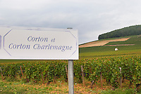 Vineyard. Corton and C Charlemagne. Aloxe Corton, Cote de Beaune, d'Or, Burgundy, France
