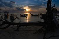 Famous fallen tree on Sunrise beach, Ko Lipe, Thailand