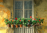 Window flower arrangement, Tuscany, Italy