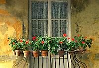 Window flower arrangement, Tuscany, Italy