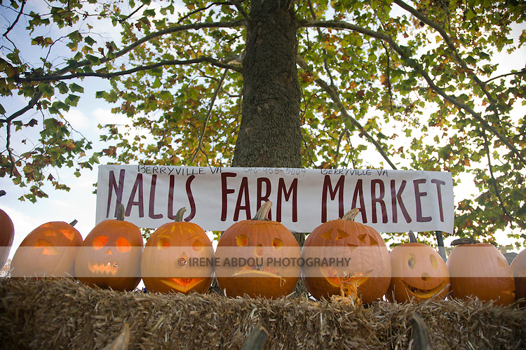Nalls Farm Market hosts pumpkin carving for families and children at the 2008 Shenandoah Valley Hot Air Balloon and Wine Festival at Historic Long Branch in Millwood, Virginia.
