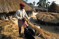 INDIA Westbengal, farmer thresh paddy with man-powered pedals threshing machine in village / INDIEN Westbengalen, Bauern dreschen Reis mit kleiner manuell betriebener Dreschmaschine