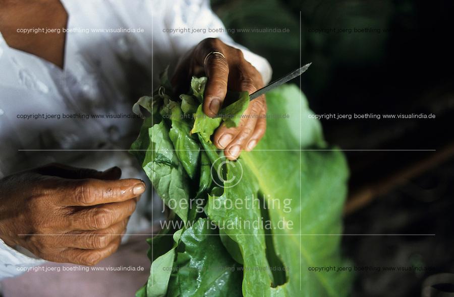 INDONESIA Java Forstenlanden, cigar tobacco farming, women prepare tobacco leaves for drying in Gudang / INDONESIEN Java Forstenlanden, Anbau von Zigarrentabak, Frauen trocknen Tabakblaetter in einem Gudang