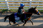 November 5, 2020: Donjah, trained by trainer Henk Grewe, exercises in preparation for the Breeders' Cup Turf at Keeneland Racetrack in Lexington, Kentucky on November 5, 2020. Scott Serio/Eclipse Sportswire/Breeders Cup/CSM