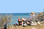 Eldery woman & puppy relax outdoors while watching the Sea of Cortes aka: Gulf of California and Vermillion Sea