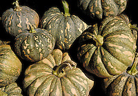 Small to medium gray green spotted and striped winter squashes with stems. .