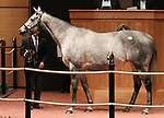 Hip #57 Zaftig consigned by Hill n'Dale Sales Agency sold for $1,400,000 at the Fasig Tipton November Sale to WERTHEIMER ET FRERE on November 6, 2011.