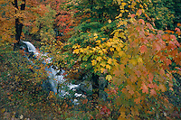 Red maples and Brandywine Falls <br />