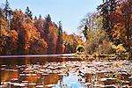 Lake Fenwick Park, King County, Washington.  Fall color lights up the lake at a county park in Washington State.  Near Auburn, Kent, Des Moines, Federal Way, SeaTac, and Tacoma, Washington