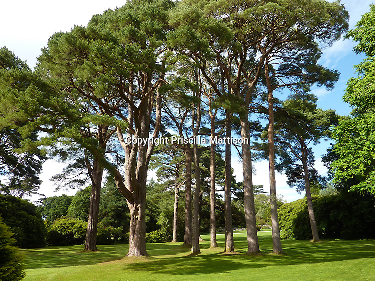 County Kerry, Republic of Ireland - July 19, 2010:  Trees tower over a dappled lawn in the garden at Muckross House in Killarney National Park.
