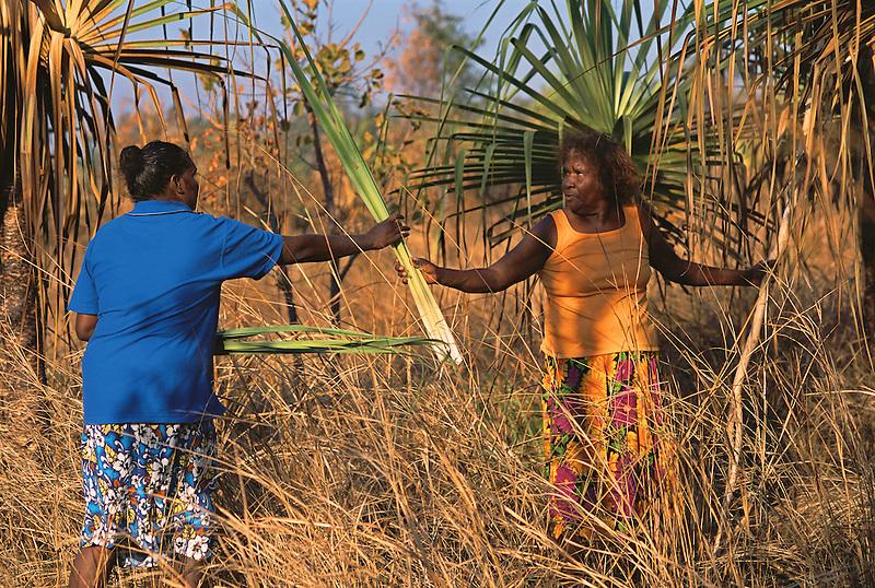 Patricia Woolla and Mavis Ngallametta collecting pandanus leaf for basketmaking, Aurukun, Cape York Peninsula.