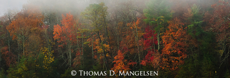 Fog hangs over the colorful trees in the Great Smoky Mountains National Park, Tennessee.