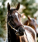 May 12, 2021: Midnight Bourbon gets a bath after exercising as Preakness Stakes hopefuls train at Pimlico Race Course in Baltimore, Maryland. Scott Serio//Eclipse Sportswire/CSM
