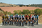 Bora-Hansgrohe set the hard pace on the front of the lead group causing the race to split into many groups on account of strong crosswinds during Stage 7 of Tour de France 2020, running 168km from Millau to Lavaur, France. 4th September 2020.<br /> Picture: ASO/Alex Broadway | Cyclefile<br /> All photos usage must carry mandatory copyright credit (© Cyclefile | ASO/Alex Broadway)