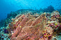 A lost net covers a section of reef in the Philippines.