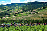 The peloton race through the vineyards of Burgandy during Stage 8 of the 2019 Tour de France running 200km from Macon to Saint-Etienne, France. 13th July 2019.<br /> Picture: ASO/Alex Broadway   Cyclefile<br /> All photos usage must carry mandatory copyright credit (© Cyclefile   ASO/Alex Broadway)