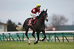 FUNABASHI,JAPAN-FEBRUARY 25: Win Bright,ridden by Masami Matsuoka,preapres for  the Nakayama Kinen at Nakayama Racecourse on February 25,2018 in Funabashi,Chiba,Japan (Photo by Kaz Ishida/Eclipse Sportswire/Getty Images)