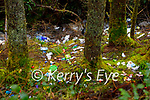 The site of the illegal dumping on Mount Eagle, Cordal on Tuesday.