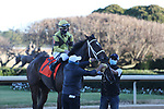January 22, 2021: Caddo River (7) with jockey Florent Geroux aboard after winning the Smarty Jones Stakes at Oaklawn Racing Casino Resort in Hot Springs, Arkansas on January 22, 2021. Justin Manning/Eclipse Sportswire/CSM