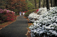 Couple bicycling through Calloway Gardens. Georgia, Calloway Gardens.