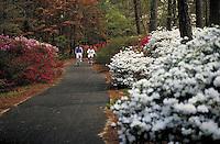 Couple bicycling through Calloway Gardens. Georgia, Calloway Gardens.