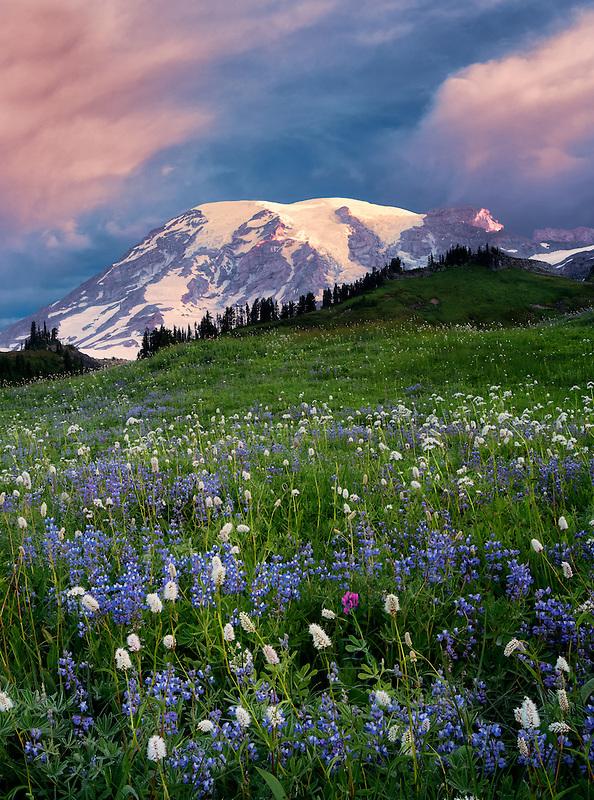 Sunrise with wildflowers and Mt. Rainier. Mt. Rainier National Park, Washington