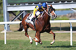 September 07, 2015. Richies Sweetheart, E.T. Baird up, wins the Turf Amazon Handicap Stakes, 5 furlongs for fillies and mares 3 and upward, at  Parx Racing in Bensalem, PA. Trainer is Larry Rivelli; (Joan Fairman Kanes/ESW/CSM)