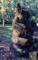Lava Tree State Park: 12 foot oha tree molds left by 1790 Mauna Loa eruption: Puna area