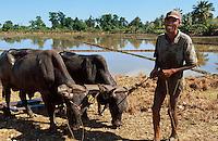 Reisfelder bei Nagua, Dominikanische Republik
