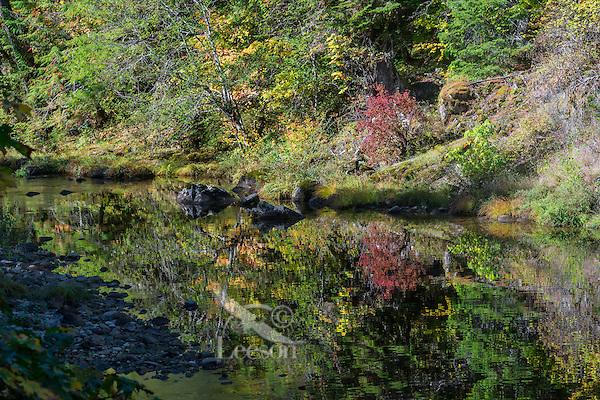 Steamboat Creek, tributary of Umpqua River (major steelhead spawning stream), Oregon, fall.