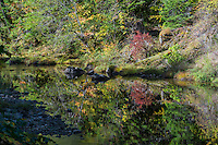 Steamboat Creek, tributary of Umpqua River (major steelhead spawning stream), Oregon, fall.