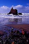 Scene on Oregon Coast