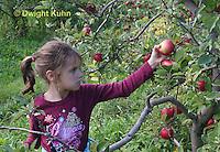 AT05-512z   Picking Apples, PRA