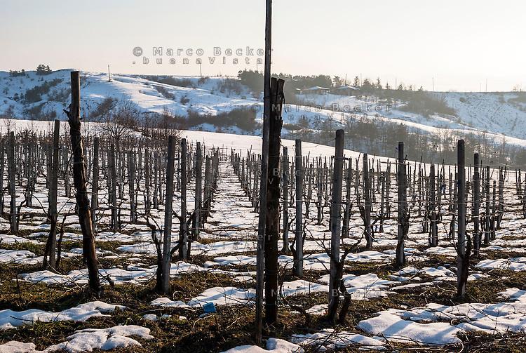 Vigneto innevato nell'Oltrepo Pavese presso Ruino (provincia di Pavia) --- Vineyard in winter in the Oltrepò Pavese near Ruino (province of Pavia)