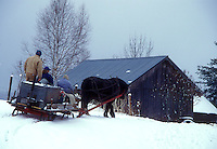 sleigh, maple syrup, winter, Cabot, VT, Vermont, People ride on sleigh pulled by a horse at Carpenter Farm to gather sap at sugaring time in early spring in Cabot.