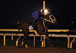 October 24, 2015:  I'm a Chatterbox, trained by Larry Jones, and owned by Fletcher and Carolyn Gray, is entered in the Breeder's Cup Longines Distaff Grade 1 $2,000,000.  Candice Chavez/ESW/CSM