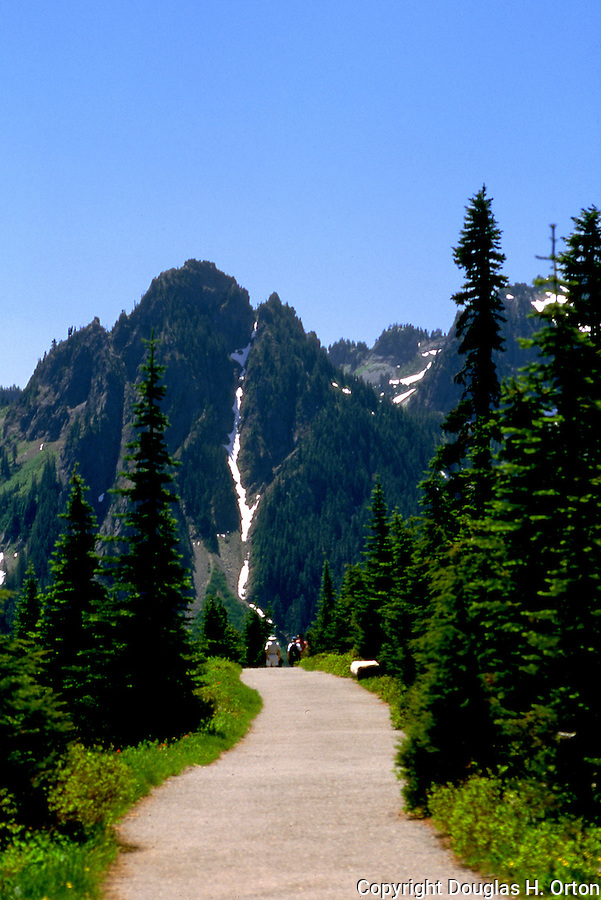 Hikers disappear downhill descending Hurricane Hill trail from the summit of famous Hurricane Ridge in Olympic National Park.  Spruce and wildflowers line the trail.  Although the area is accessible all year, snow lingers in this July photograph Olympic Peninsula