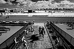 June 19, 2020: A horse comes off the track as horses prepare for the Belmont Stakes at Belmont Park in Elmont, New York. (Image made with a modified infrared sensor camera) Scott Serio/Eclipse Sportswire/CSM