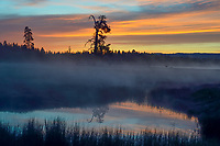 Timmerman Ranch, cattle, pond, and ground fog, Oregon. Sunrise.