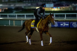 October 30, 2019: Breeders' Cup Classic entrant Code of Honor, trained by Claude R. McGaughey III, exercises in preparation for the Breeders' Cup World Championships at Santa Anita Park in Arcadia, California on October 30, 2019. Michael McInally/Eclipse Sportswire/Breeders' Cup/CSM