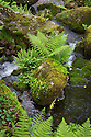 The River Dart running through Dart Valley Nature Reserve. Dartmoor, Devon, UK. June.
