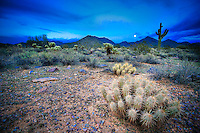Hedgehog Cactus and Full Moon - Arizona - McDowell Mountains - Scottsdale