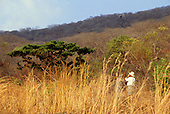 Lupoli, Tanzania. Tourist on safari looking through binoculars at wildlife.