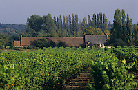 Europe/France/Centre/41/Loir-et-Cher/Cheverny: Le vignoble - rang de vigne et propriété viticole