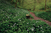 Woodland path, Kelburn Country Park, Fairlie, Ayrshire, Scotland<br /> <br /> Copyright www.scottishhorizons.co.uk/Keith Fergus 2011 All Rights Reserved