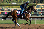 ARCADIA, CA  OCTOBER 30:  Breeders' Cup Juvenile Fillies Turf entrant Abscond, trained by Eddie Kenneally, exercises in preparation for the Breeders' Cup World Championships at Santa Anita Park in Arcadia, California on October 30, 2019. (Photo by Casey Phillips/Eclipse Sportswire/CSM)