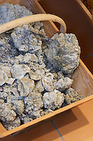 soil sample with fossilised shells chateau d'yquem sauternes bordeaux france