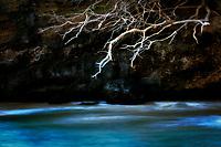 Rotts of tree and  ocean. Hawaii. The big Island